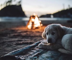dog, fire, and animal image