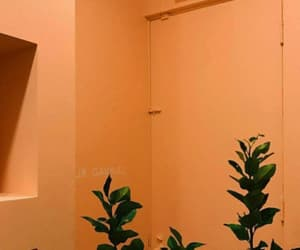 aesthetic, orange, and plants image