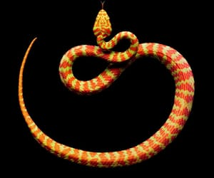 animals, reptiles, and serpent image