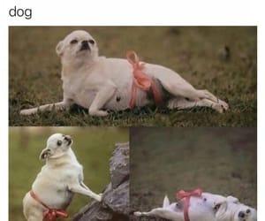 cute, animal, and chihuahua image