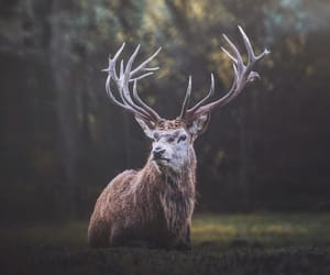 animals, autumn, and deer image