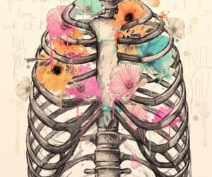 amor, color, and esqueleto image
