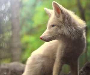 magic, mood, and white fox image