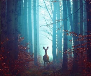 autumn, deer, and forest image