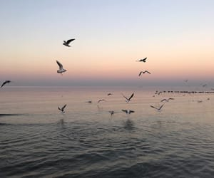 birds, rose, and sea image