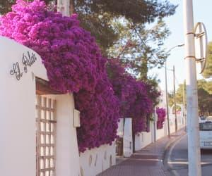 flowers, ibiza, and street image