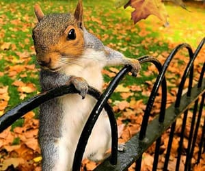animals, autumn, and Fences image