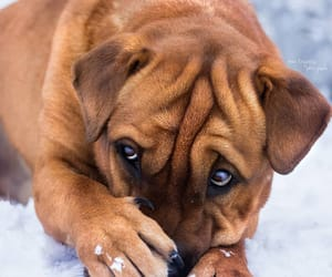 animals, pets, and puppies image