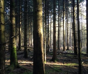 tree, wood, and landscape image