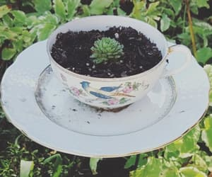 garden, teacup, and green image
