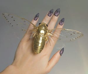 accessories, butterfly, and gold image