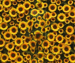 artsy, happy, and sunflower image