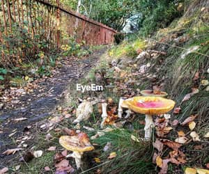 beautiful, magic, and mushrooms image