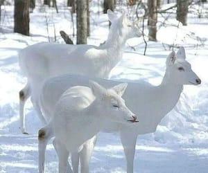 animal, deer, and white image