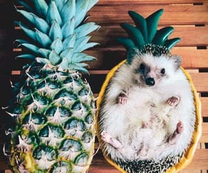 pineapple, hedgehog, and animal image