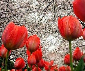 beautiful, nicesight, and flowers image