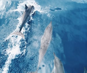 dolphin, animal, and ocean image