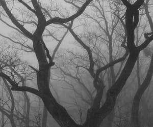 tree, nature, and dark image