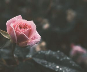 raindrops, beauty, and flowers image