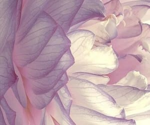 aesthetic, blossom, and colour image