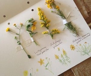 flowers, yellow, and aesthetic image