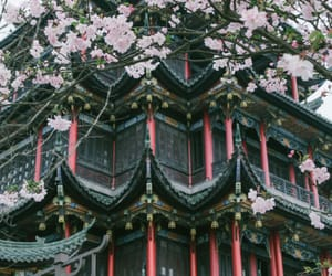 cherry, flower, and japan image