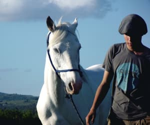 animals, countryside, and farm image