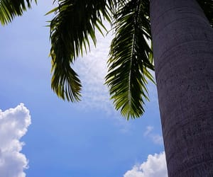 bright, cloud, and palm tree image
