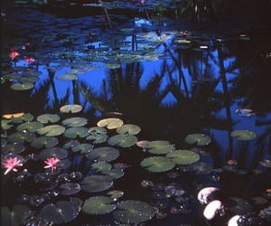 aesthetic, beautiful, and lilies image