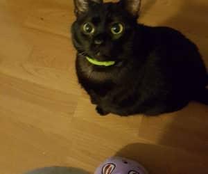 luna, mi mascota, and mi gata image