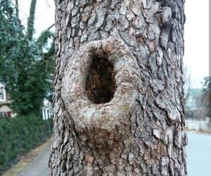 bark, nature, and hole image