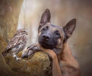 dog and owl image