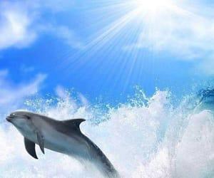 Animales, nadar, and delfin image