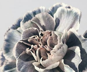 flower, flowers, and grey image