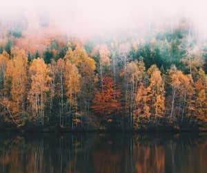 جبال, أشجار, and قهوة image