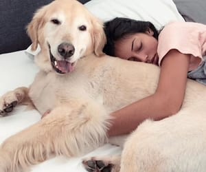 dog, cindy kimberly, and girl image
