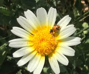 nature, pollen, and white flower image