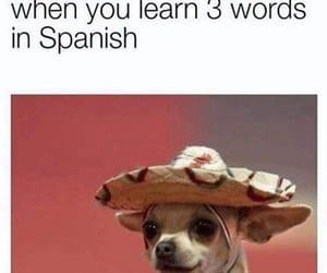 meme, funny, and spanish image