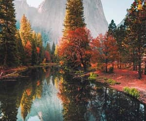 nature, autumn, and fall image