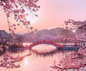 pink, japan, and bridge image