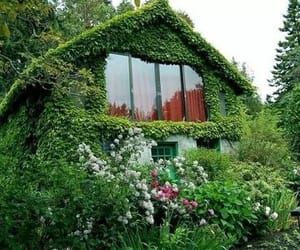green, house, and plant image
