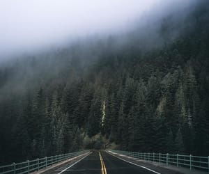 foggy, woods, and mountain image