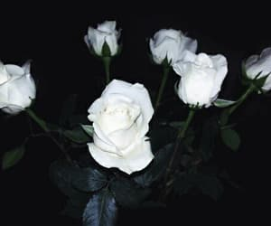 rose, aesthetic, and white image