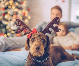 christmas, cozy, and cute image