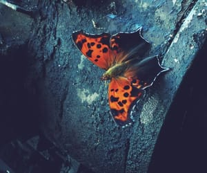 beautiful, butterfly, and pretty image