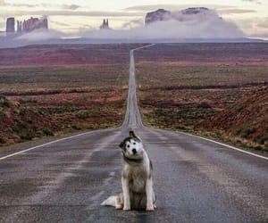 dog, landscape, and animals image