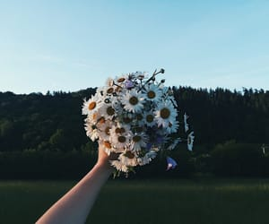 daisy, flowers, and hometown image