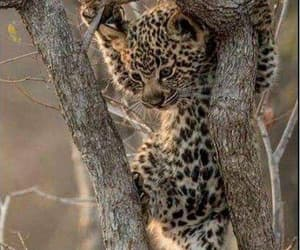 baby animals, trees, and wild cats image