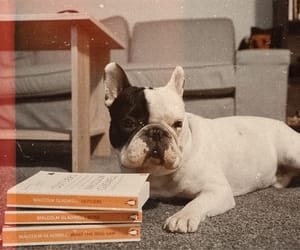 books, dog, and love image