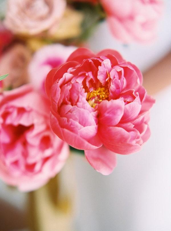 flor, belleza, and naturaleza image